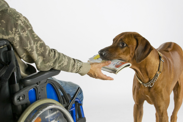 Mobility Assistance Dog by Shutterstock